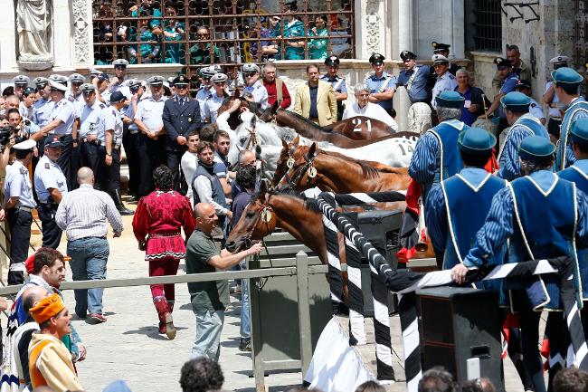 Palio di Siena, Assegnazione dei Cavalli: Esultano Chiocciola, Oca eGiraffa