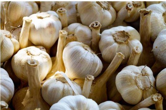 Provincia di Siena: L'Aglione entra nel Repertorio regionale e all'Anagrafe nazionale dell'agrobiodiversità