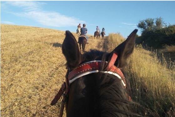 Ippica, Scansano , a cavallo su antiche vie: Così il territorio è valorizzato eprotetto