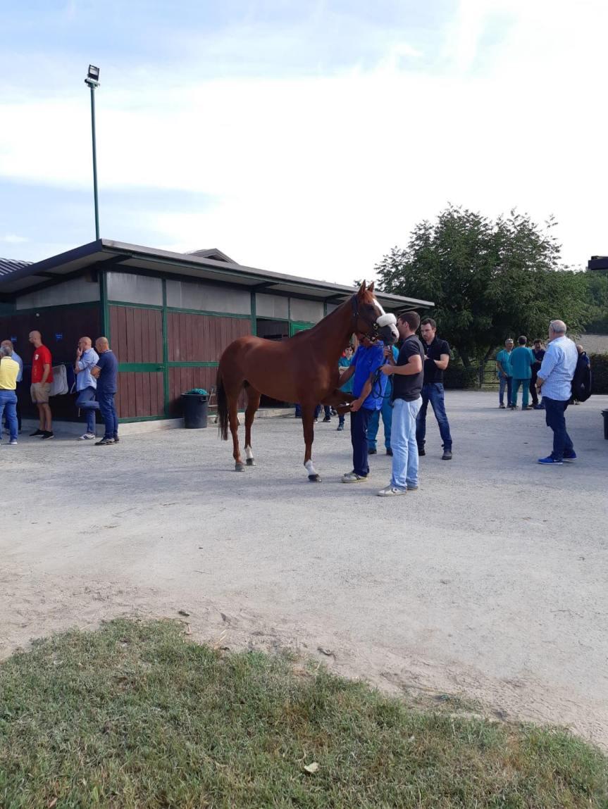 Palio di Asti: Oggi 28/08 resoconto visite cavalli delpomeriggio