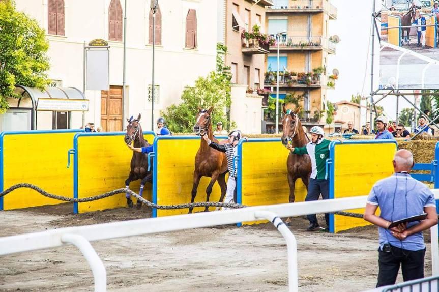 Palio di Ronciglione: I Rioni hanno scelto i Cavalli per le Corse aVuoto