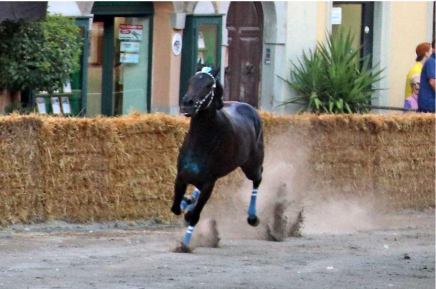 Palio di Ronciglione: Le Corse a Vuoto saranno il24-25/08