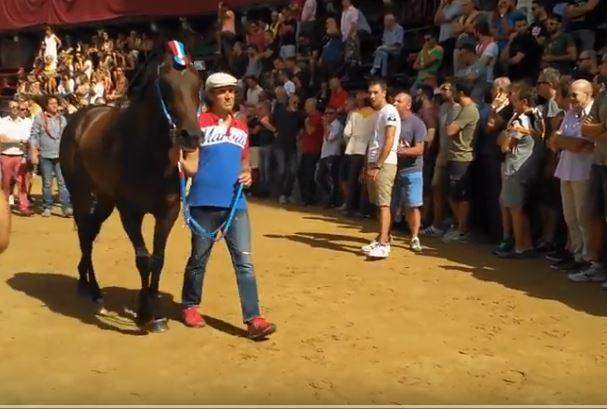 Palio di Siena: Rexy, cavallo del Palio di Siena della Contrada della Pantera al Palio del 16 agosto2018