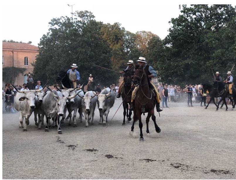 Siena: Il 21 e 22 settembre torna la Fattoria in Fortezza con un'edizione ricca dinovità