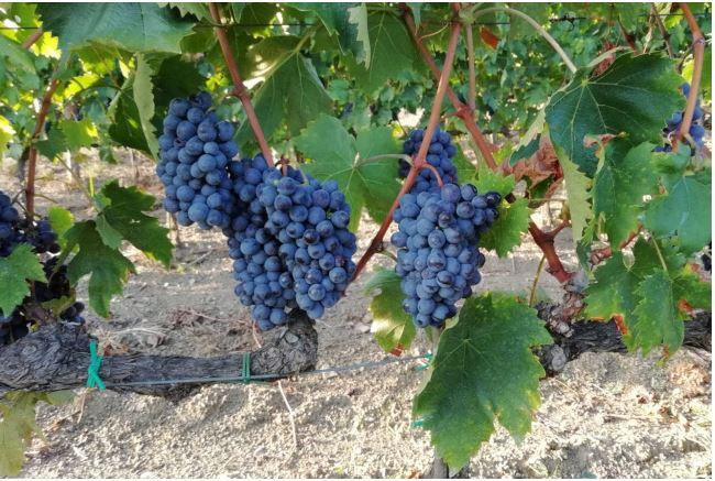 Siena: Orcia Doc, il vino che incanta operatori e wine lovers da tutto ilmondo