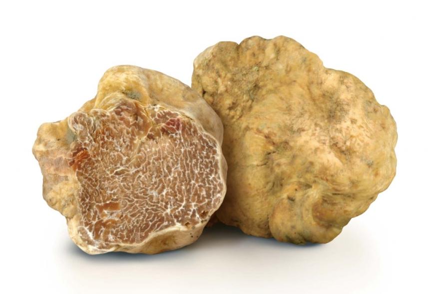 Gastronomia: Caccia al tartufo e ai saporidell'autunno