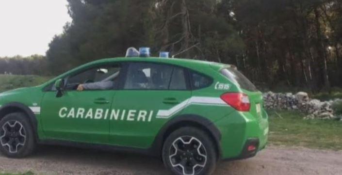 Provincia di Siena: Imprenditore denunciato per illecito ambientale e paesaggistico, stava tagliando alberi su terreni diversi da quelli per i quali eraautorizzato