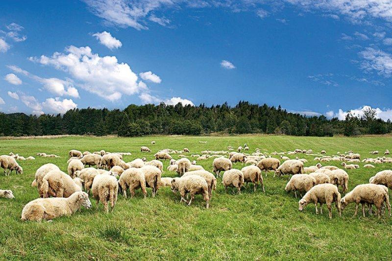 Toscana, Coldiretti, Toscana: Un piano per rilanciare il settoreovino