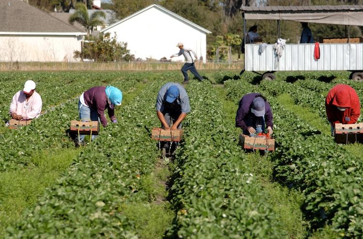 Siena: Garanzie sui prestiti agli agricoltori, mercoledì 18 settembre presentazione aSiena