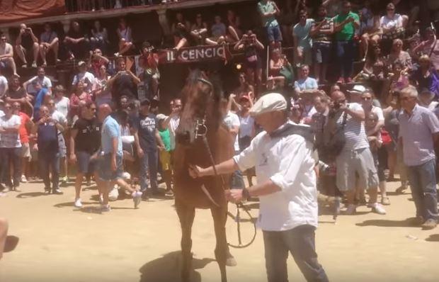 Palio di Siena: Il cavallo a Siena, protagonista del Palio, Re dellaPiazza