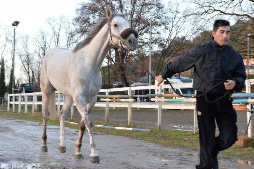 Corse a Vuoto Ronciglione, Rione Campanone: Ingaggiato il cavallo UbertSpy