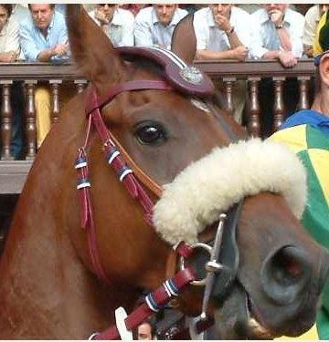 Palio di Siena, I Cavalli del Palio: ArtùValoroso