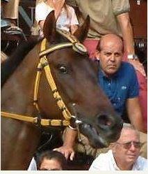 Palio di Siena, I Cavalli del Palio: BigBig