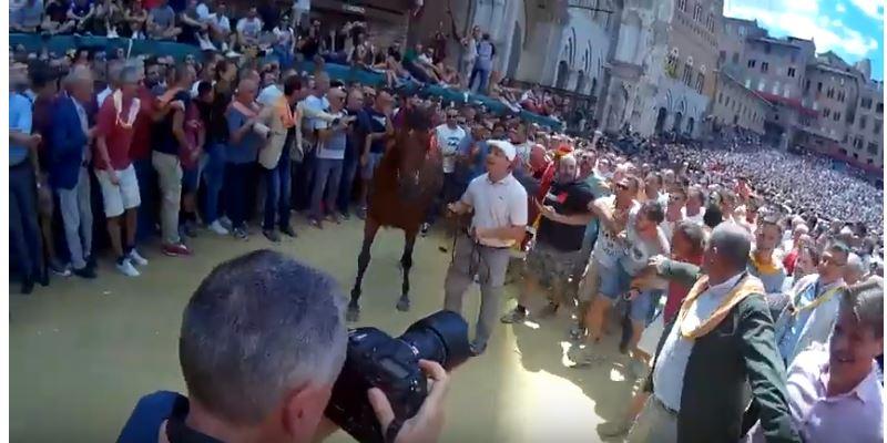 Palio di Siena: Montone – Palio di Siena Tratta cavalli agosto2017
