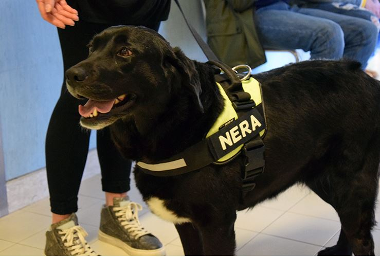 Siena: Pet Therapy in pediatria: Il cane Nera dà il buongiorno ai piccoli pazienti delleScotte
