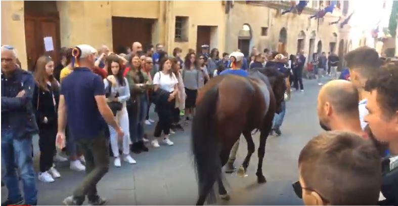 Palio di Siena: Palio di Siena straordinario benedizione del cavallo delnicchio