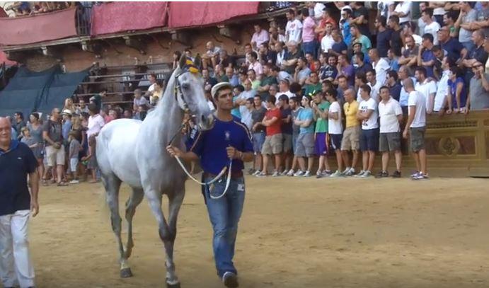 Palio di Siena: Indianos – I cavalli del Palio diSiena