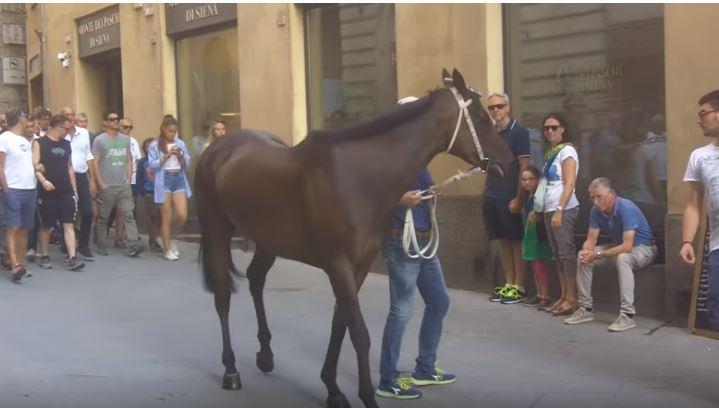 Palio di Siena: Morosita Prima – I cavalli del Palio diSiena