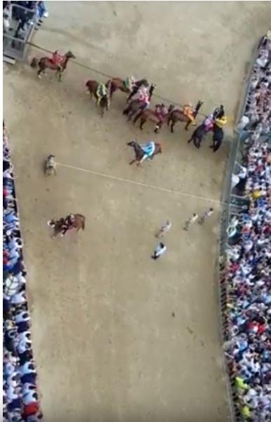 Palio di Siena: Scelti i 10 cavalli per il Palio del16/08