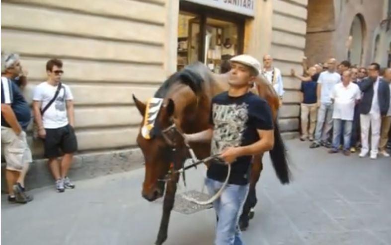 Palio di Siena: Elfo di Montalbo – I cavalli del Palio diSiena