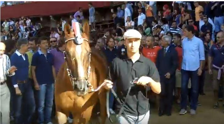 Palio di Siena: Ilon – I cavalli del Palio diSiena