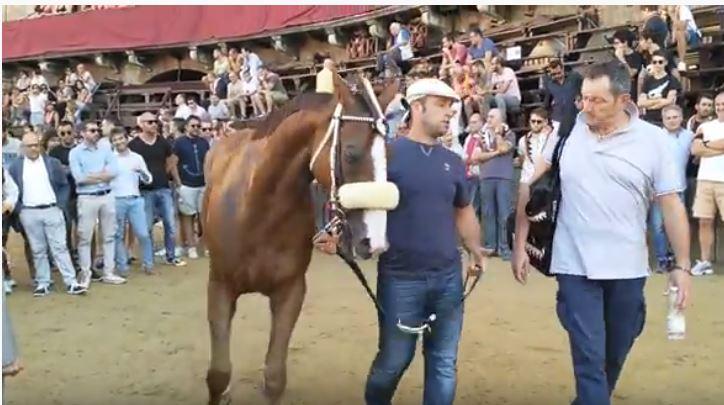 Palio di Siena: La pazienza dei cavalli – PortoAlabe