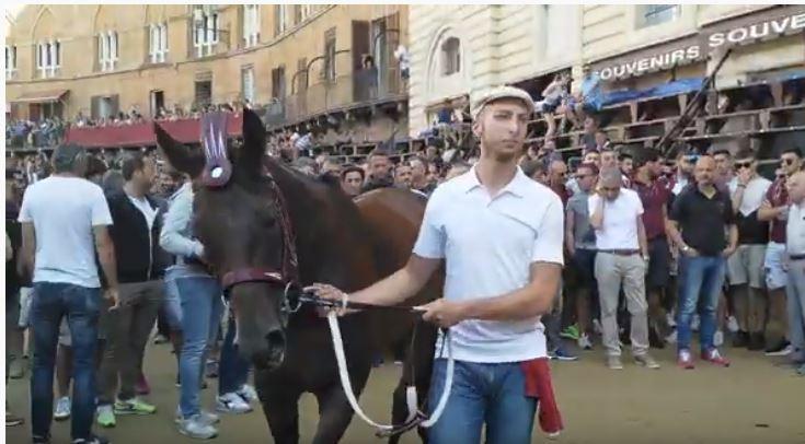 Palio di Siena: I Cavalli del Palio di Siena – Violenta daClodia