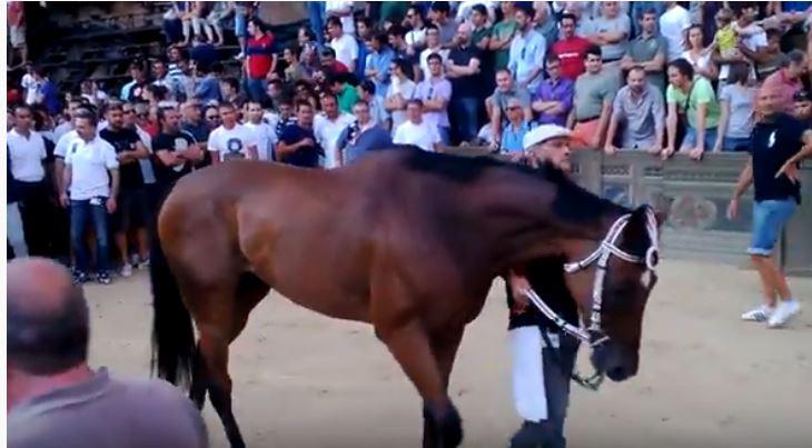Palio di Siena: Lo Specialista – I cavalli del Palio diSiena