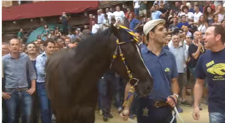 Palio di Siena: Querino – I cavalli del Palio diSiena