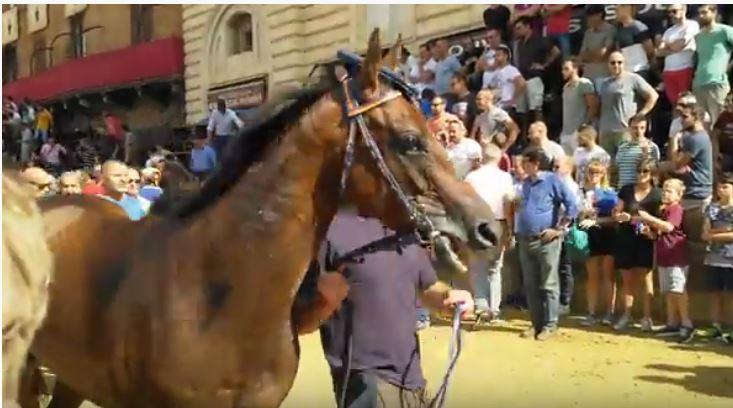 Palio di Siena: La pazienza dei cavalli – Tale eQuale