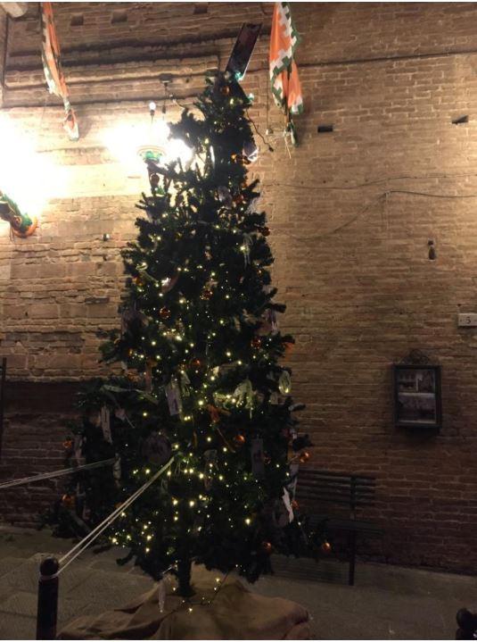 Siena, Contrade: Il miglior albero di Natale è dellaSelva