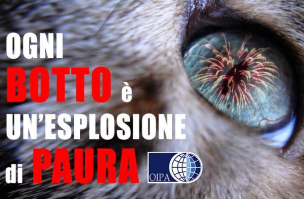 Italia, Botti  di Capodanno: Come proteggere gli animalidomestici