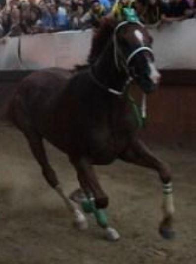 Palii e Corse: Il cavallo San Vittore lascia la Scuderia Topalli e passa a quella di MattiaChiavassa