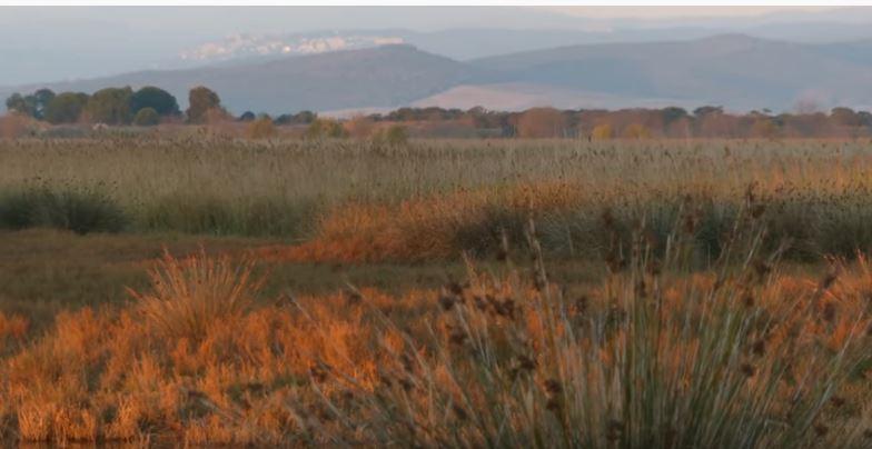Toscana: Puntone di Scarlino Maremma Tuscany – The Padulewetland