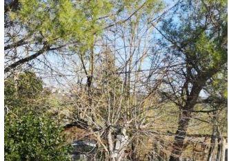 Siena: Camion trancia i cavi in Strada di Istieto, cittadini senzaluce