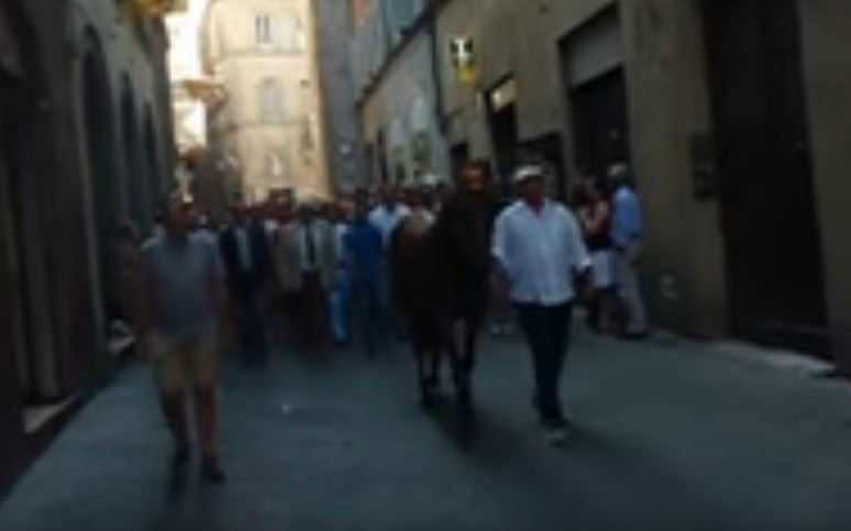 Palio di Siena: The Chiocciola Contrada HorseParade.AVI