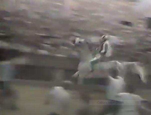 Palio di Siena: Palio 2 luglio1985