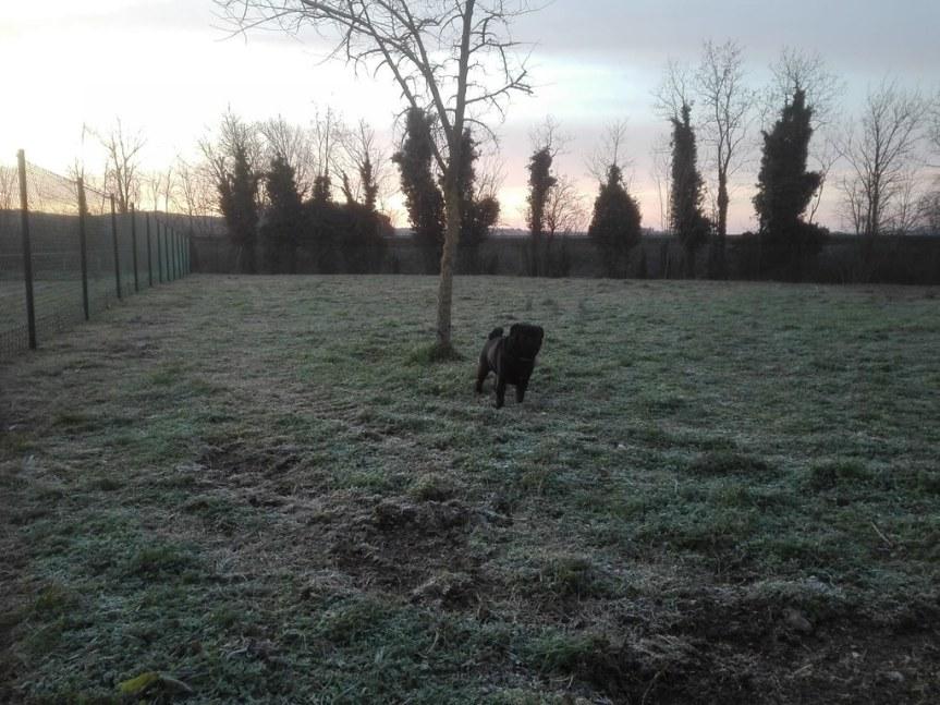 Siena: Ampliata l'area cani a Taverned'Arbia