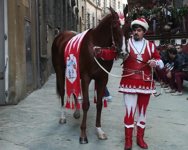 Palio di Siena: Morte cavallo Palio 2018, le associazioni animaliste si oppongono all'archiviazione