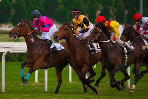 IPPICA, HORSE ANGELS: 'TROPPI INCIDENTI NEGLI IPPODROMI, MIPAAF INTERVENGA'