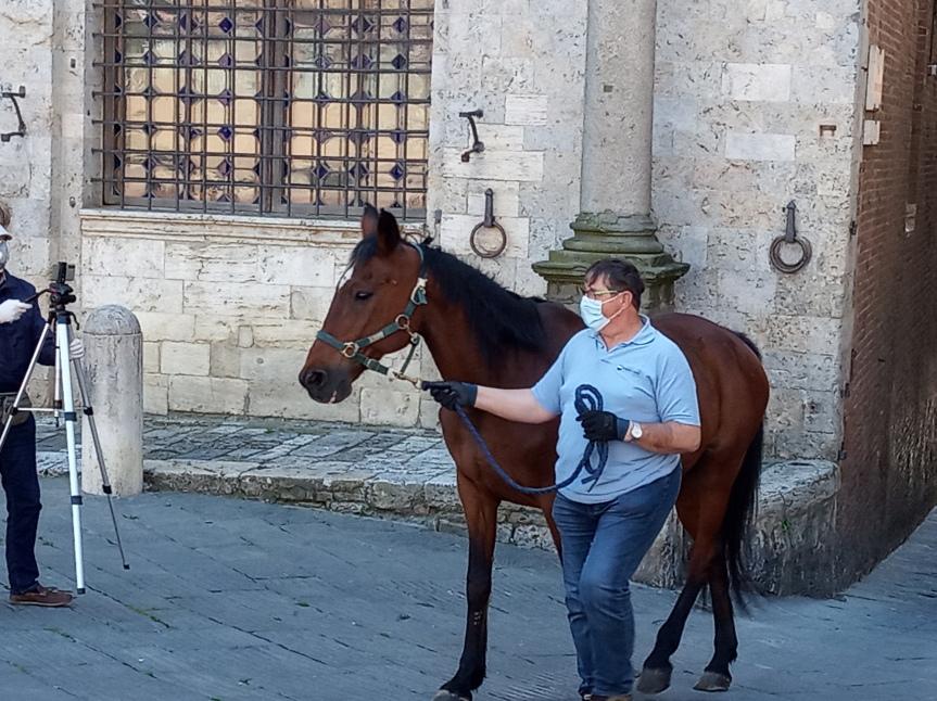 Siena: Servizio Tg3 Toscana su#Botticello