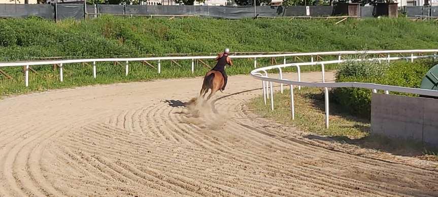 Palio di Fucecchio: Oggi 26/05 si sono svolti gli allenamenti dei cavalli alla Bucad'Andrea