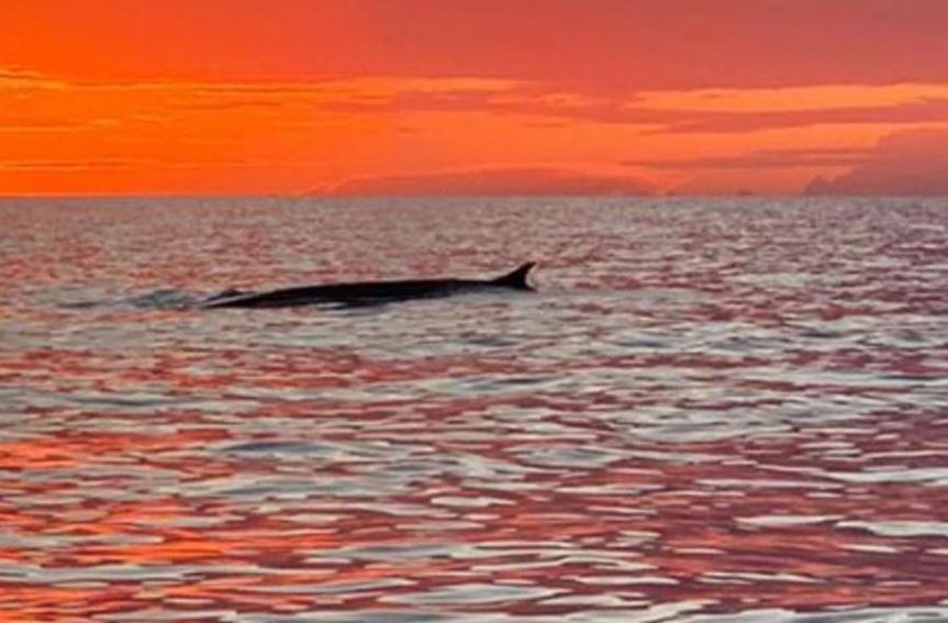 Toscana: Balene all'Elba, lo spettacolo altramonto