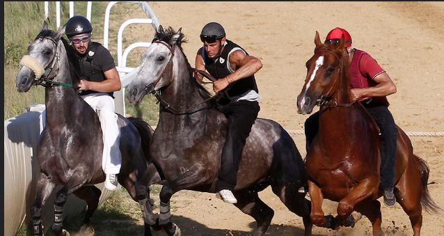 """Palio di Siena, Il cavallo come atleta è legge: """"Un passo culturale in avanti, ma vanno individuati iparametri"""""""