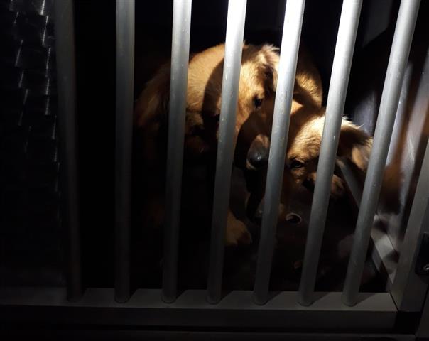 provincia di Siena: Cani smarriti a Castelnuovo Berardenga, sono al canile diMurlo