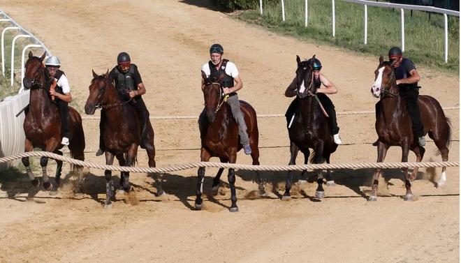 Siena, Il cavallo come atleta per legge: Adesso èufficiale