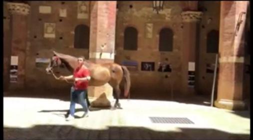 Palio di Siena, senza Palio per la prima volta dopo 76 anni: Ma Istriceddu e Già del Menhir hannogirato