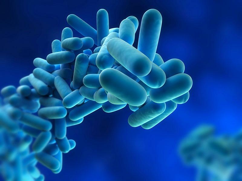 Siena: Legionella, 6 casi a Siena nei primi sei mesi del2020