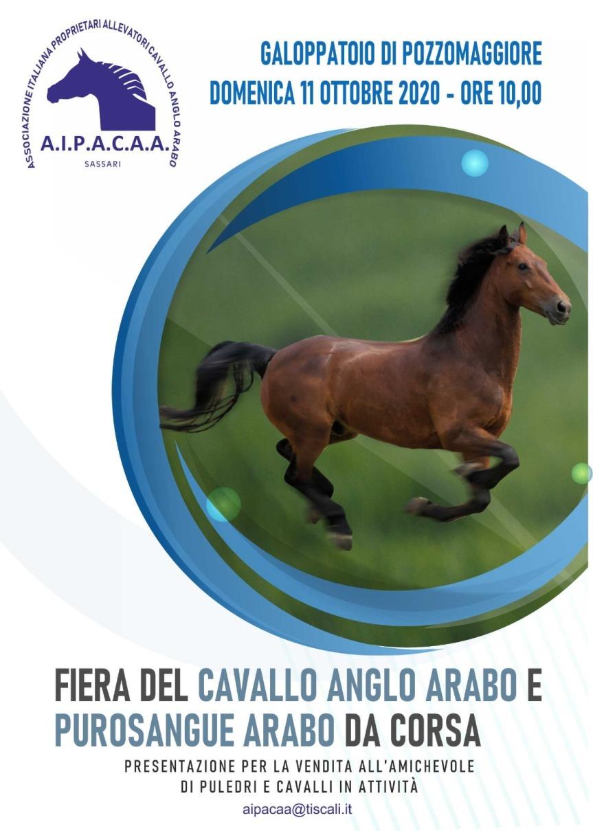Ippica, Sardegna, Aipacaa: Regolamento della Fiera del cavallo Anglo Arabo e Purosangue Arabo da corsa a Pozzomaggiore ( SS ) dell'11/10