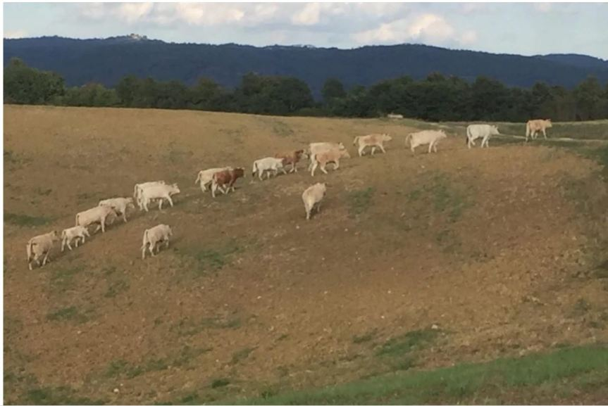 Toscana, Allevatori ovicaprini da latte: 1,4 milioni di ristori dallaRegione